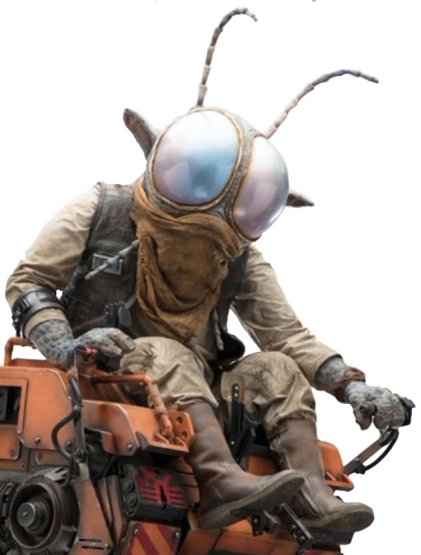Vazzet Dipterz (Cyclorrian Technician)